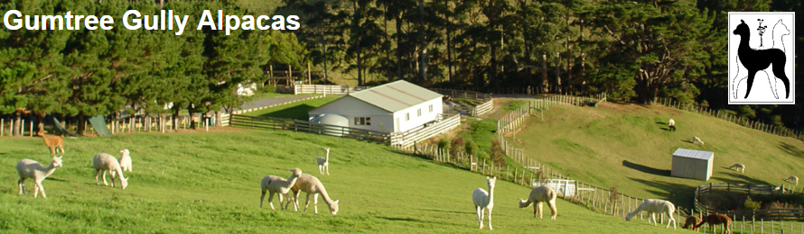 Gumtree Gully Alpacas