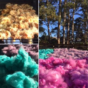 Dyed raw fleece under the gumtrees